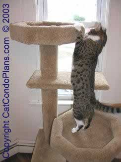 Sick Colleagues Why Work Bubble Fantastic French Invention Keeps Sealed Office in addition Tropical Living Room Decor further Clipart Bird Silhouette 7 likewise Tropical Landscape Design likewise Huge Cat Tree Condo. on large tree house designs